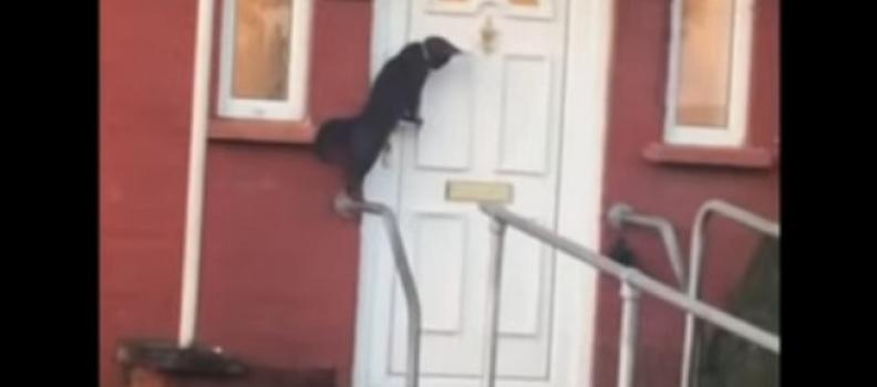 Gatinho educado: Vídeo viral mostra Gato batendo na porta para tutor abrir; assista
