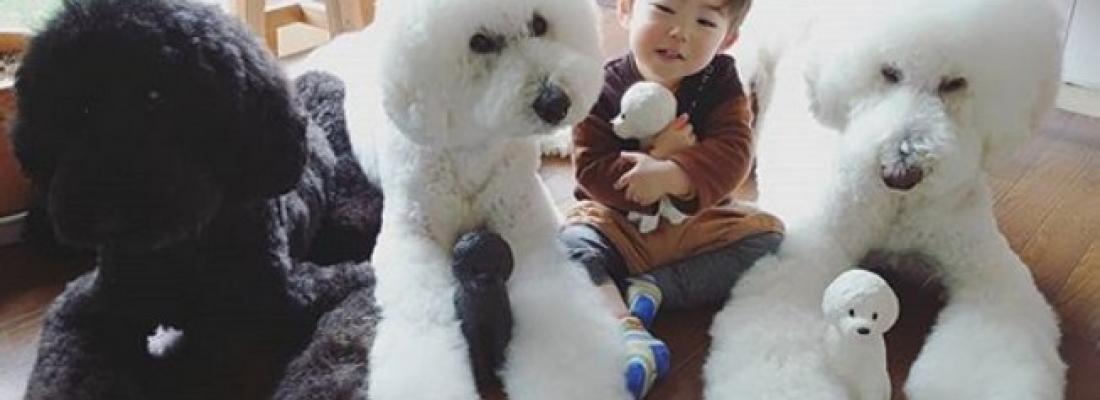 Poodles gigantes melhores amigos de crianças fazem sucesso no Instagram