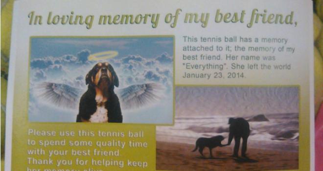 Em homenagem a seu cão falecido, homem envia bolas de tênis para tutores