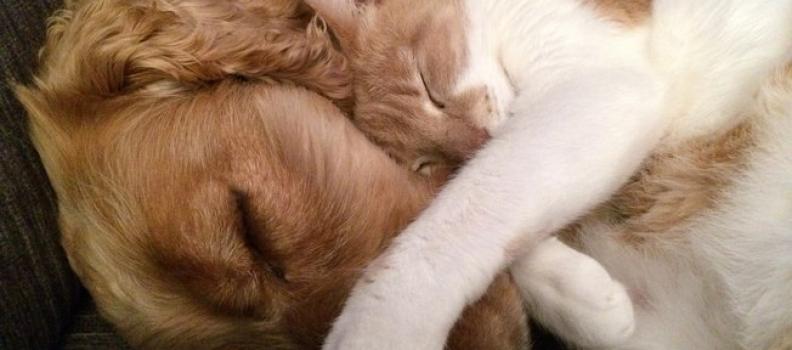 Amizade entre gatinha e cachorro conquista a internet