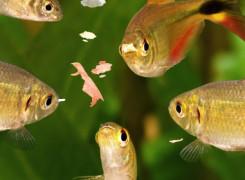 Alimentos para os Peixes
