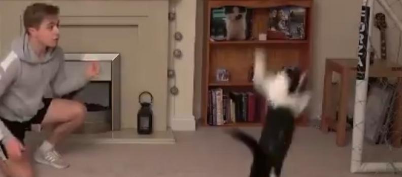 Gatinho Goleiro: Vídeo mostra impressionantes 'defesas' do pet