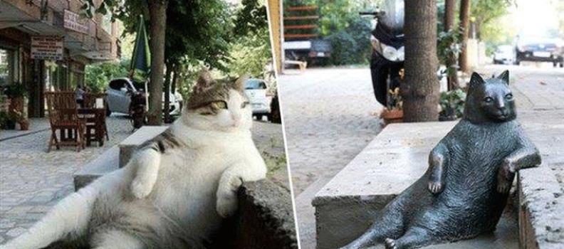 Istambul faz estátua para celebrar gato amado pela vizinhança