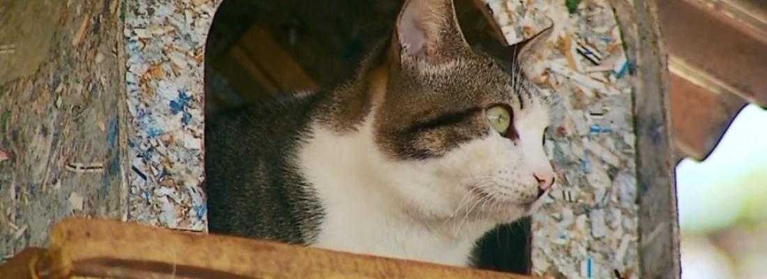 Conheça 'My Lay', o gatinho medroso que virou atração por não descer da árvore onde vive