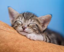 5 curiosidades sobre Gatinhos