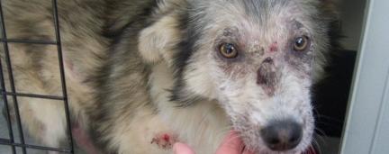 Senado aprova o aumento de pena para quem cometer maus-tratos aos animais
