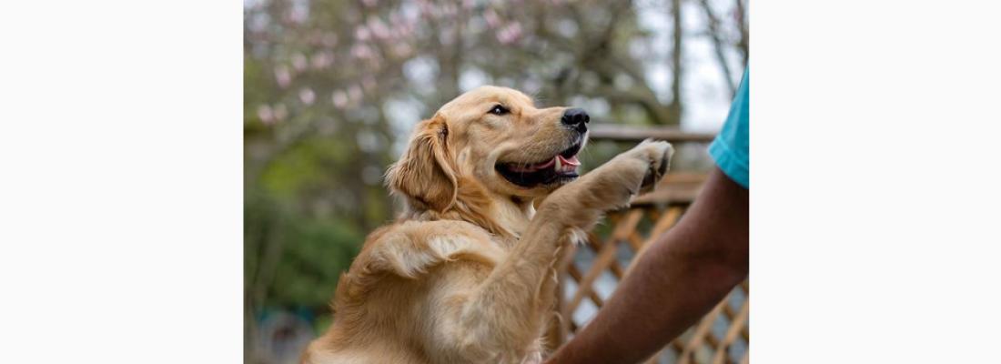 Cãozinho espera carteiro todos os dias e comove internet em vídeo