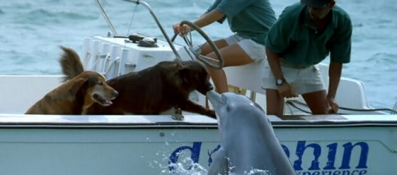Golfinho sai da água e cumprimenta cãozinho – veja o vídeo