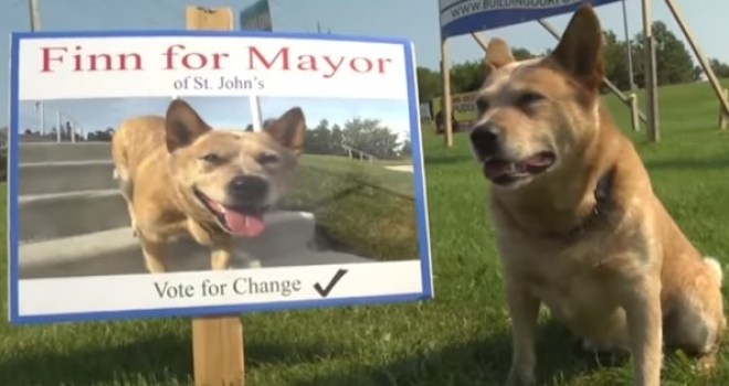 Conheça Finn, o candidato a prefeito em uma cidade no Canadá