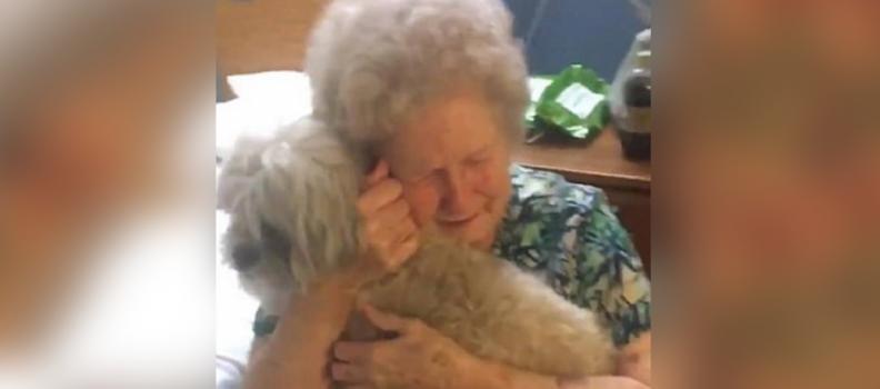 Neto surpreende avó deprimida com um novo cão e posta vídeo comovente