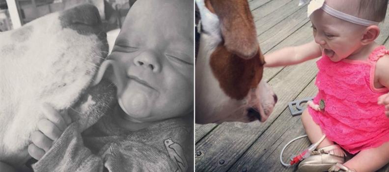 Cãozinho resgatado cria amizade e ajuda a cuidar da bebê prematura da família