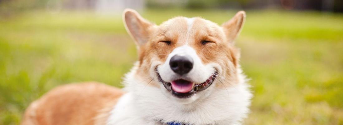 Senado aprova projeto de lei que classifica animal como sujeito de direito, e não como coisa