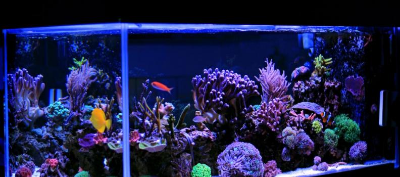 3 mitos sobre aquário de água salgada