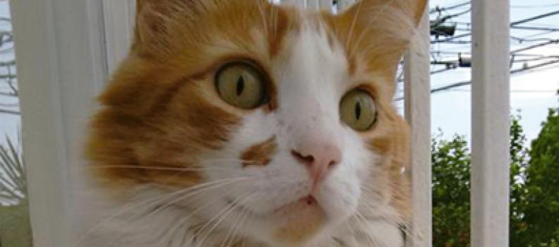 Gatinho abandonado aparece em porta de tutora que havia acabado de perder seu pet