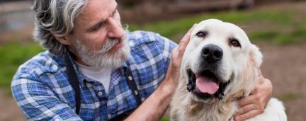 Estudo: Cães se tornam menos curiosos, mas mais apegados à medida que envelhecem