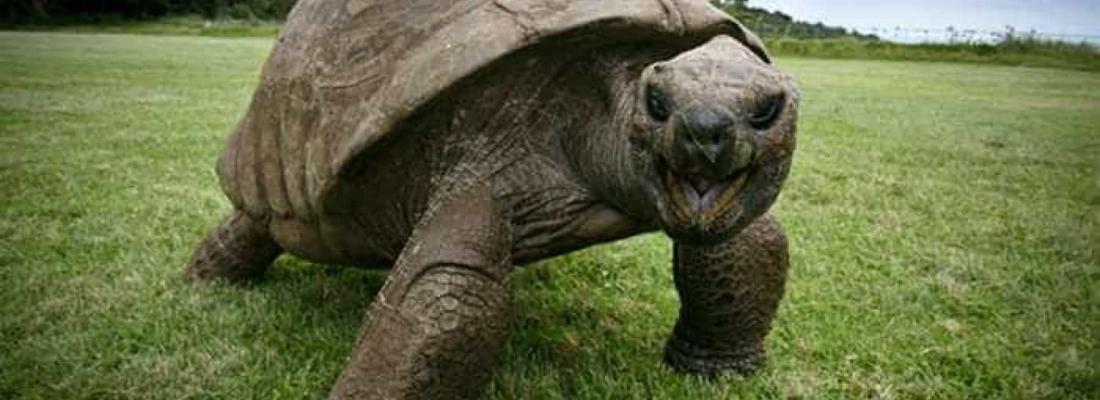 Conheça Jonathan, o animal mais velho do mundo