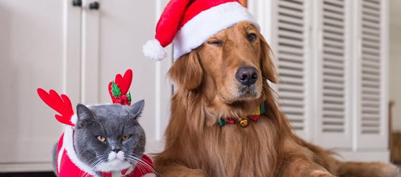 """8 dicas e cuidados na hora de """"natalizar"""" seu Pet no final do ano"""