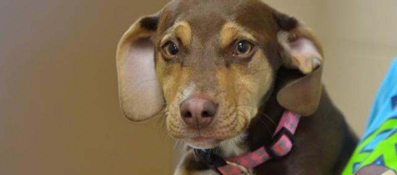 Cadela adotada resgata menina de três anos presa em valeta