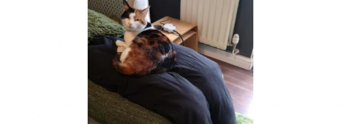 Tutores criam 'colo falso' para gata carente e resultado é hilário