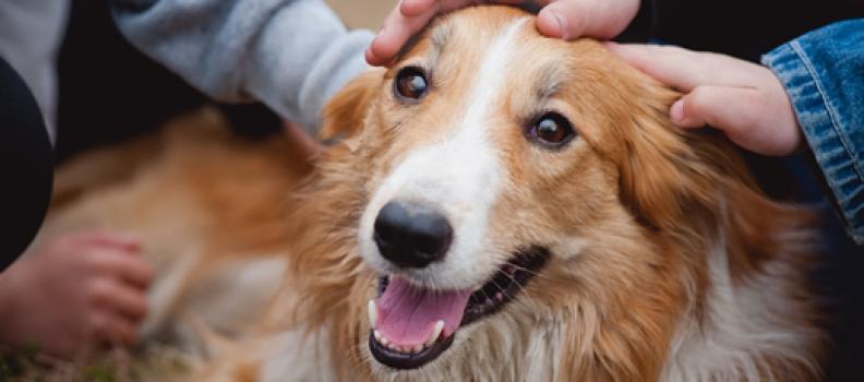 Onde seu cachorro mais gosta de receber carinho