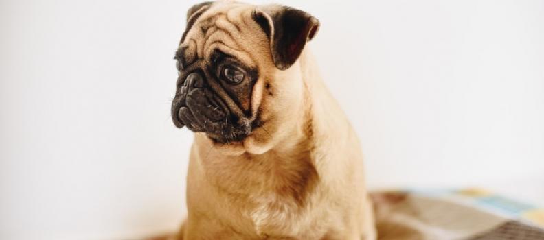 Vermes em cães e gatos: sintomas, como prevenir e tratar