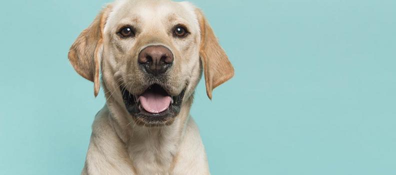 Os cachorros realmente podem entender as pessoas?