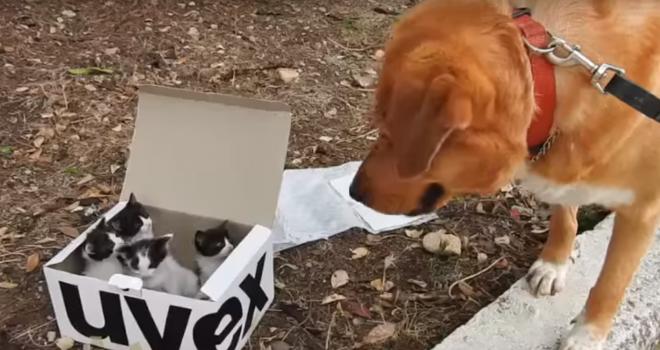 Cão salva e adota 4 gatos abandonados em montanha