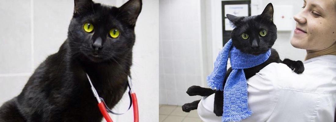 Cachorro estava tremendo de medo até que um gato preto se aproximou da gaiola dele