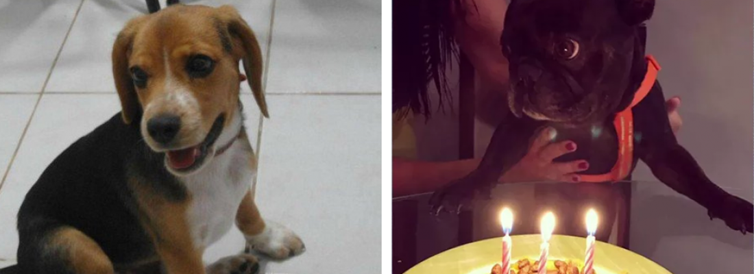 Alerta: Calor Intenso causa morte de dois cãezinhos no Rio