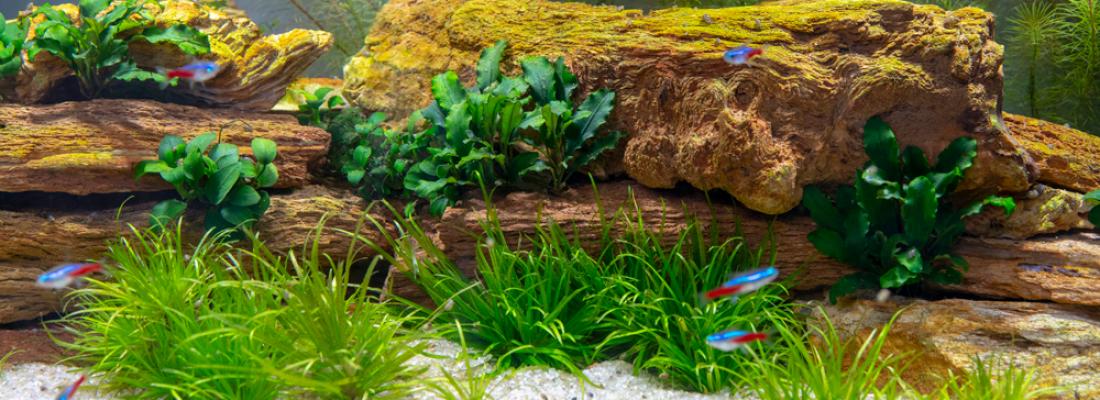 O que pode causar pH alto em um aquário?