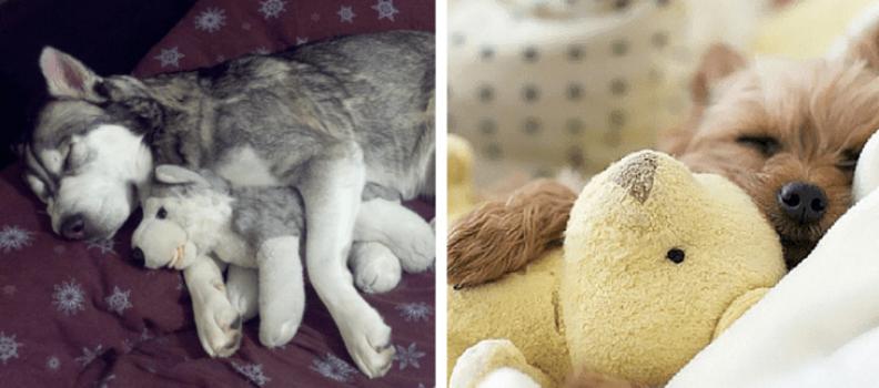 Esses cachorros não conseguem dormir sem seus brinquedos favoritos