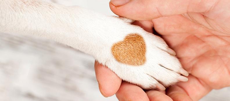 Dicas: Cuidados para Patinhas de Cachorros