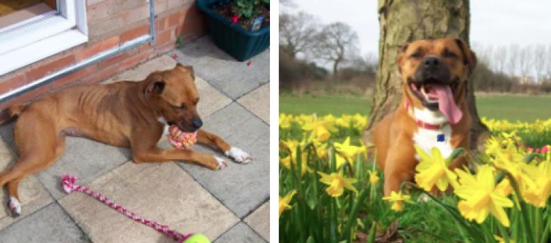 O poder do amor: Incríveis transformações de cães resgatados