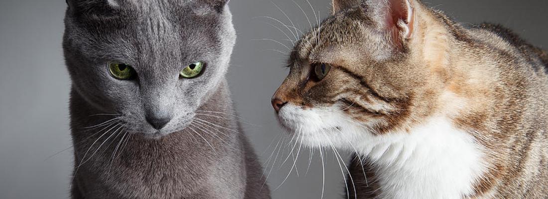 Como facilitar a socialização do novo gato em casa