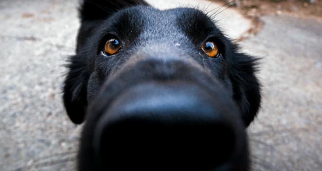 Cachorros preferem morder pessoas ansiosas, diz estudo